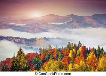 Colorful autumn morning in the Carpathian mountains....
