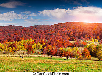 Colorful autumn panorama in the high mountains.