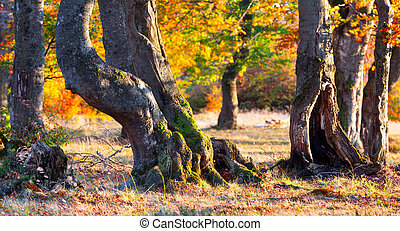Colorful autumn panorama of the sunny forest