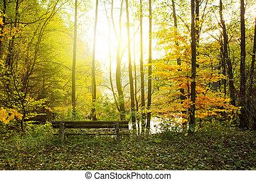 Autumn landscape with wooden bench under bright sunlight in autumn forest.