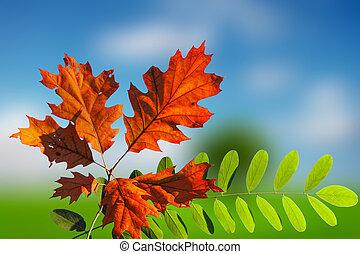 Colorful autumn