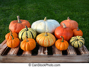 Colorful autumn pumpkins and squashes