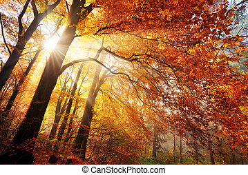 Colorful autumn scenery in a forest