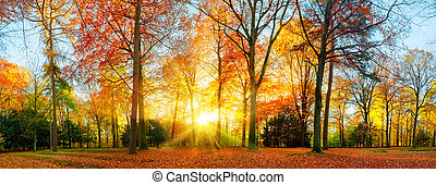 Colorful autumn scenery in a park
