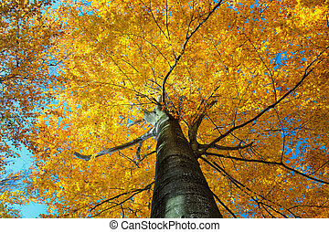 Colorful autumn tree in forest. view from below