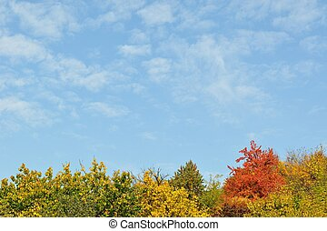 Colorful autumn trees and sky