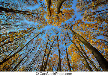 Colorful autumn trees in forest. view from below