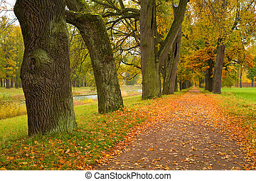 colorful autumn trees in the park