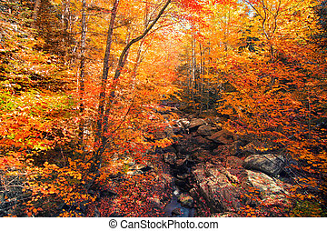 Colorful autumn trees over water stream