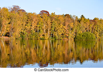 Colorful autumn trees reflected in a lake