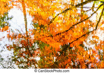 Colorful Autumn trees reflected in water