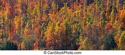 Colorful autumn trees - Panoramic view of colorful autumn...