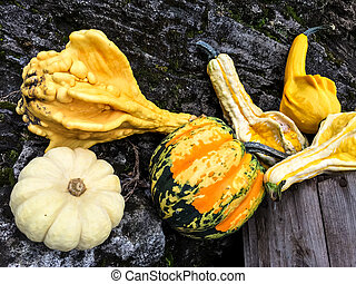 Colorful autumn vegetables