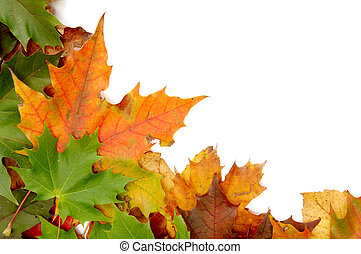 Colorful autumnal leaves on a white background