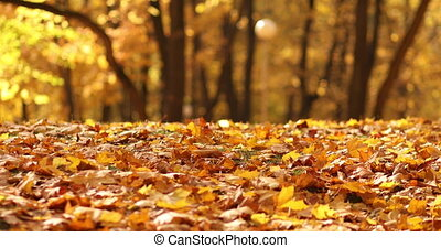 Stock video of bright autumnal foliage on the ground in park in close-up. Leaves are falling down slowly on the path in the park. Autumnal background concept.