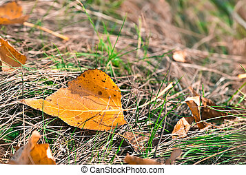 Colorful background with autumn leaf