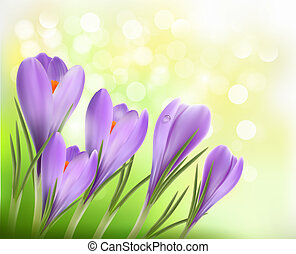 Colorful background with crocus  Vector illustration