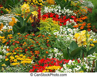 colorful bed of flowers