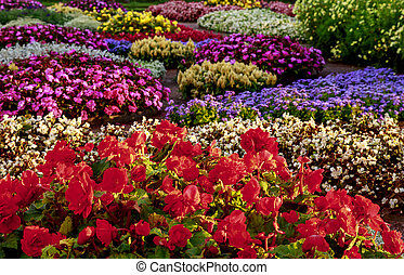 Colorful beds of flowers in the garden. Multicolor flowerbeds in bloom. Blurred floral background. Shallow depth of field.
