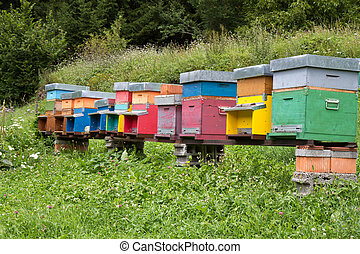 Colorful Beehives on a meadow