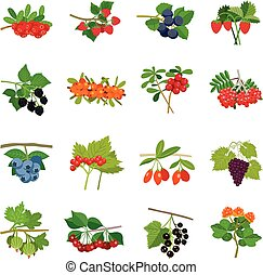 Colorful Berries Icons Set