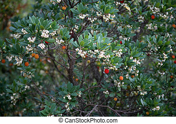 Colorful berries on a bush