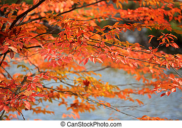 Colorful Birch leaves in autumn time