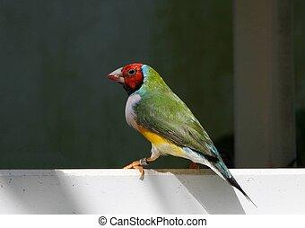 Colorful Bird 1 - Bird picture taken in Key West Butterfly...