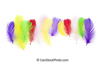 colorful bird feather set isolated on white