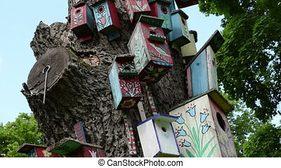 colorful bird nest boxes houses hang on old dead tree trunk...