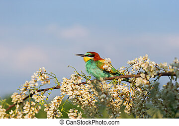 colorful bird on a flowering tree against the sky