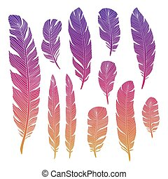 Colorful birds feathers of set isolated on white backgrond....