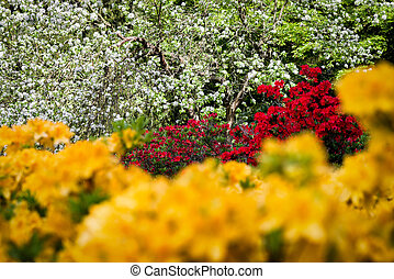 Colorful blooming plants in park