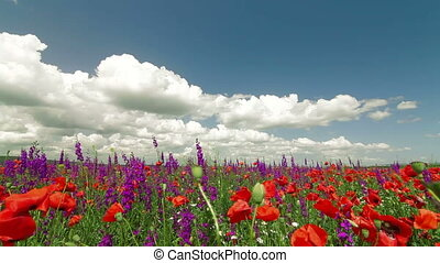 Colorful Blooming Spring Field