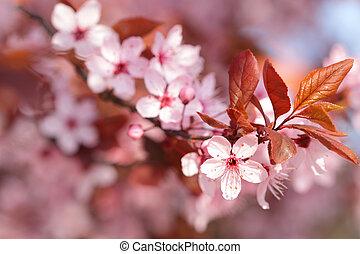 Colorful blooming tree in springtime season