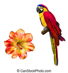 Colorful blue parrot macaw, bright red Flower