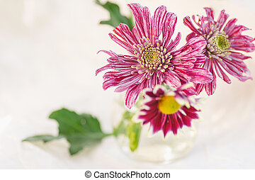 colorful bouquet of chrysanthemums on a light background pink colors macro selective focus