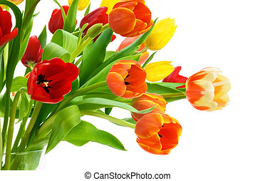 Colorful bouquet of tulips on white