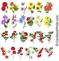 flowers isolated on white background