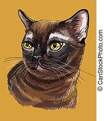 Colorful Burmese Cat