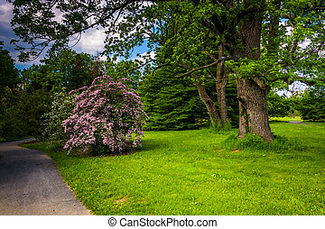 Colorful bushes and trees along a path at Cylburn Arboretum in B