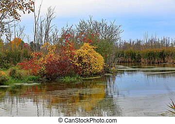 Colorful bushes at the edge of a waterway