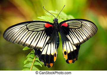 Colorful butterfly. - An exotic butterfly on a leaf.