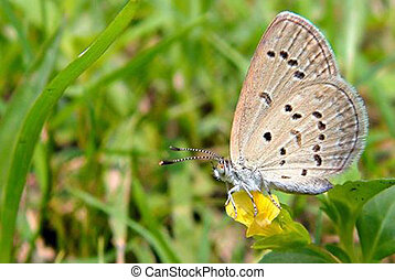 Butterfly, isolated
