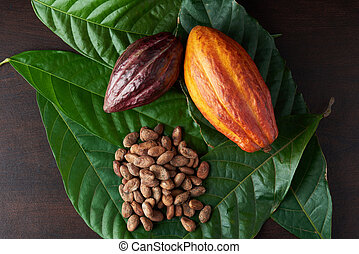 Colorful cacao harvest background
