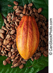 Colorful cacao plant theme