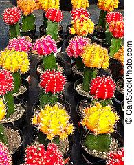 colorful cactus