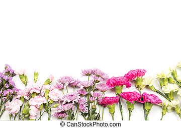 Colorful carnation flowers on white background, top view