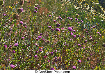 Colorful carpet of summer flowers in a forest glade.