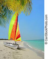 Colorful catamaran and palm tree on beach